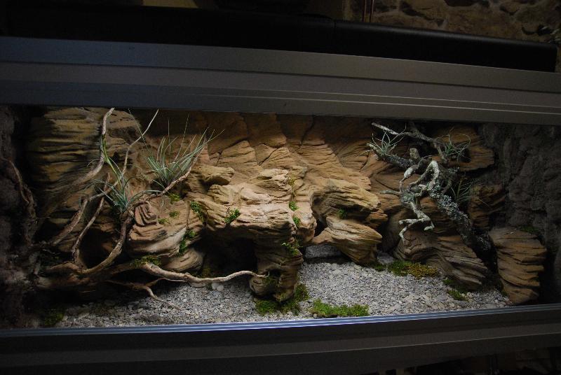 fabricant de d cor terrarium terrarien aquaterrarium