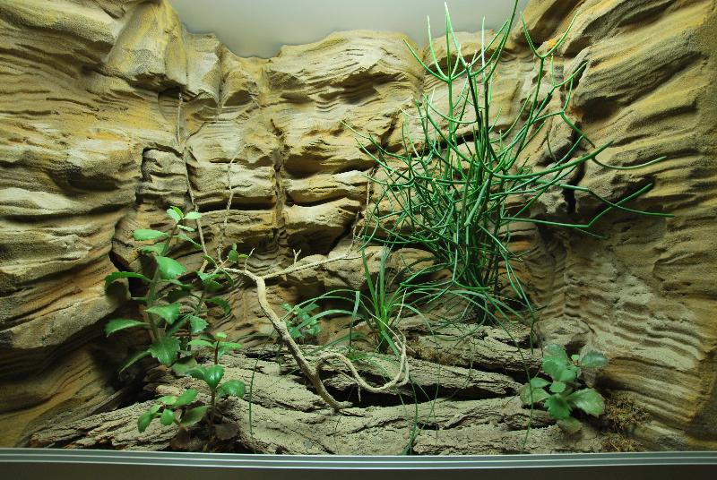 fabricant de d 233 cor terrarium terrarien aquaterrarium d 233 sertique tropicale fausse roche